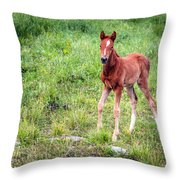 Baby Colt Throw Pillow