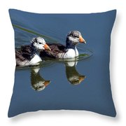 Baby Coots Throw Pillow