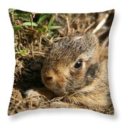 Baby Eastern Cottontail Throw Pillow