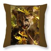 Baby Cougar Watching You Throw Pillow