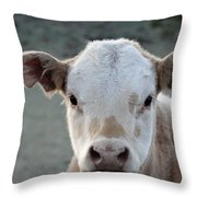 Baby Cow In Colorado Throw Pillow