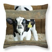 Baby Cow Throw Pillow