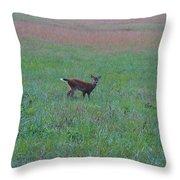Baby Deer At Sunrise Throw Pillow