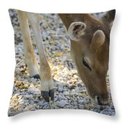 Baby Deer Throw Pillow
