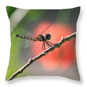 Baby Dragonfly Throw Pillow