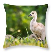 Baby Duckling In The Morning Light Throw Pillow