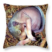 Baby Eastern Gray Squirrel Throw Pillow by Millard H. Sharp