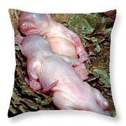 Baby Eastern Gray Squirrels Throw Pillow