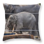 Baby Elephant Lily Throw Pillow