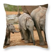 Baby Elephant Trio Throw Pillow