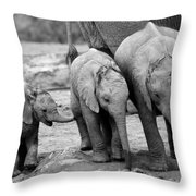 Baby Elephant Trio Bw Throw Pillow