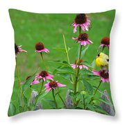 Baby Finch Throw Pillow