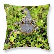 Baby Gator Throw Pillow by Adam Jewell