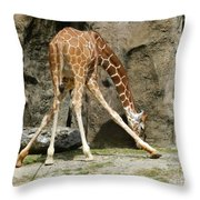Baby Giraffe 1 Throw Pillow