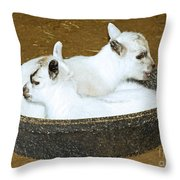 Baby Goats Lying In Food Pan Throw Pillow
