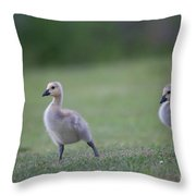 Baby Goslings Throw Pillow