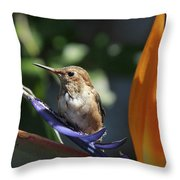 Baby Hummingbird On Flower Throw Pillow