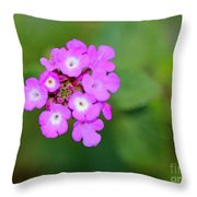 Flower - Baby In Pink Throw Pillow