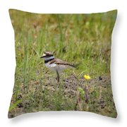 Baby Killdeer Throw Pillow
