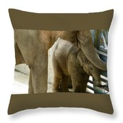 Baby Lily Elephant Throw Pillow