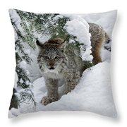 Baby Lynx Hiding In A Snowy Pine Forest Throw Pillow
