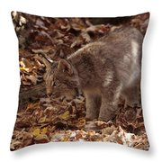 Baby Lynx Hunting In An Autumn Forest Throw Pillow