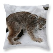 Baby Lynx Staying Close To Its Winter Den Throw Pillow