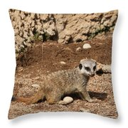 Baby Meerkat Throw Pillow