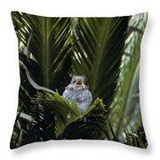 Baby Mockingbird Throw Pillow