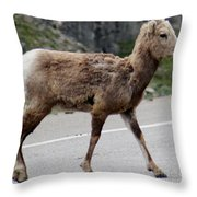 Baby Mountan Goat Crossing Road Throw Pillow