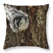 Baby Nuthatch Throw Pillow