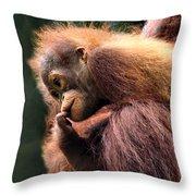 Baby Orangutan Borneo Throw Pillow