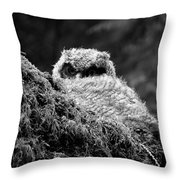 Baby Owl 3 Throw Pillow