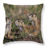 Baby Prairie Dogs Throw Pillow