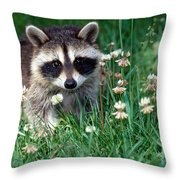 Baby Raccoon Throw Pillow