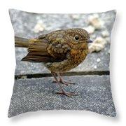 Baby Robin Feeding Throw Pillow