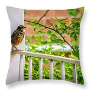 Baby Robin - Such A Big World Throw Pillow