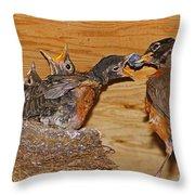Baby Robins Feeding  An5141-14 Throw Pillow