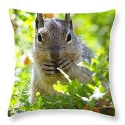 Baby Rock Squirrel  Throw Pillow