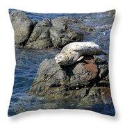 Baby Sea Lion On Rock At San Juan Island Throw Pillow