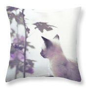 Baby Siamese Kitten Throw Pillow