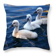 Baby Swans Throw Pillow