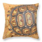 Baby Tortoise Throw Pillow