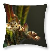 Baby's Milkweed Throw Pillow by Sean Green