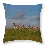 Babysitting - Antelope - Johnson County - Wyoming Throw Pillow
