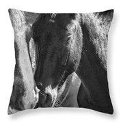 Bachelor Stallions - Pryor Mustangs - Bw Throw Pillow