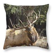 Back Scratcher Throw Pillow