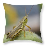 Back Side View Of Green Grasshopper....   # Throw Pillow