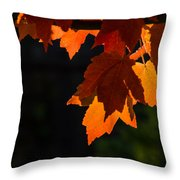 Backlit Autumn Maple Leaves Throw Pillow