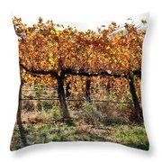 Backlit Autumn Vineyard Throw Pillow
